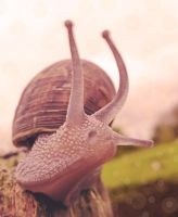Snail by KiwiTakeFlight