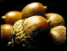 Striped Acorns by SauriaMami