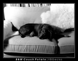 Black and White Couch Potato by vbgecko