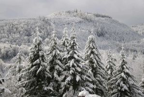 Snowy Firs by Mauser712