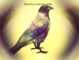 The Jackdaw Of Light by CarlosAE