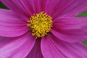 flower by picture-melanie