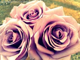 354 Project-Day 46: Delicate Roses by hourglass-paperboats