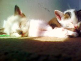 Sif and Nina, my cats by Voltrotz