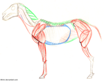 Horse Anatomy by Ithlini