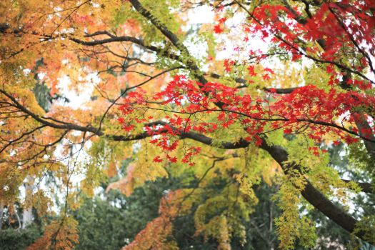 Autumn: Red on Green by dancingmad242