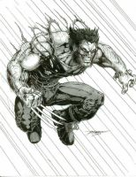 Wolverine by -vassago-