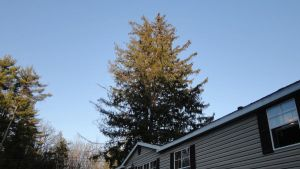 The Big Tree Out Front by outsidersfan33