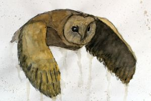 Owl by Neaffka