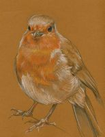 Robin Study by AshleighPopplewell