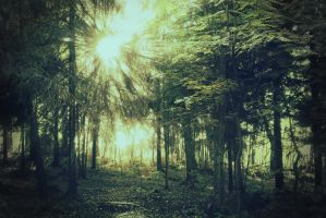 Forest 16 by Amalus