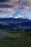 Mt Hood - Hood River Valley II by enunez