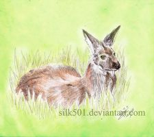 EAP Dec : Siberian musk deer by silk501