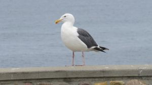 Seagull Stock - 1 by CNLGraphics