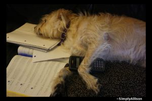 Dixie Does Accounting by simplyallison