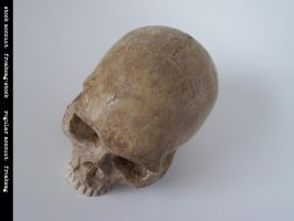 freaksmg-stock - new skull 12 by freaksmg-stock