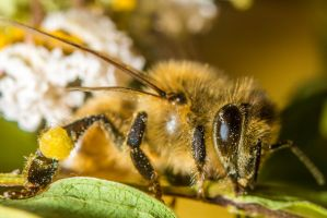 My Friend Bob The Honey Bee by Fiend-V