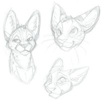 Serval heads by epesi