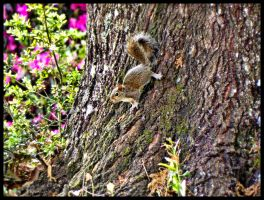 Squirrel baby lost - photo#21