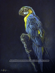 Blue Macaw by AmyHodgkinson