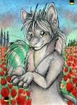 Field of the tulips by Suane