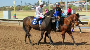 Racehorse Stock 15 by Rejects-Stock