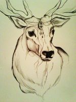 stag by Bethanyyes