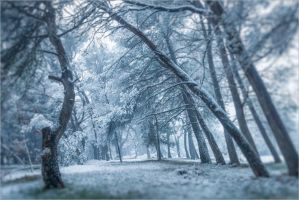 Snowday by songe