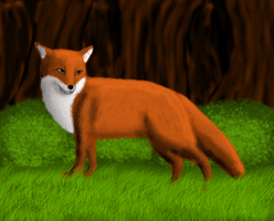 Request - Realistic fox by Erexis