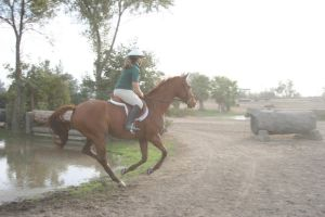 Chestnut Thoroughbred Gelding Cross Country by HorseStockPhotos
