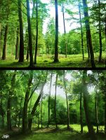 Forest by Franset
