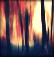 forest.2 by dreamfaces