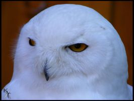 A stare says more than the beak ever can tell by Katana-Tate
