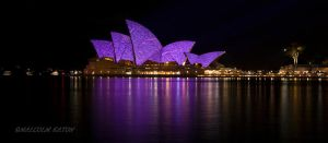 Purple Haze by FireflyPhotosAust