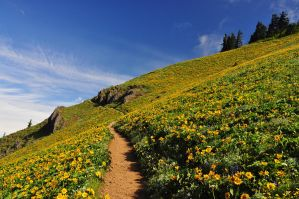 Dog Mountain Trail, 2011-3 by greglief