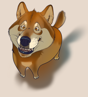 Doge Is Very Joy by AuldBlue