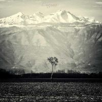Minimal tree by LuGiais