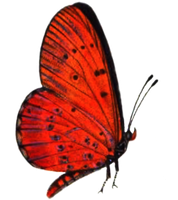 Butterfly 4 PNG stock by lubman