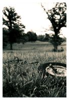 Field of Tires by iSHOTit