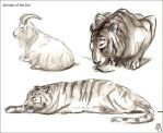 Zoo scetches by Elruu