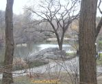 Central Park, NYC by Sister-of-the-Moon