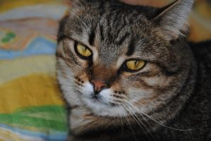 The portrait of a cat 2 by garbo009