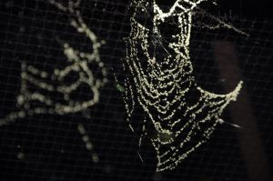 Spider Web 03 by FairieGoodMother