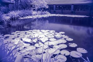 Infrared photo of a small pond by otas32
