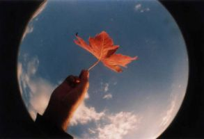 flor outonal by addicted-to-lomo