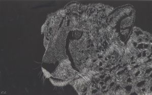 Scratchboard Cheetah by PeachBerryDivision