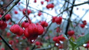 Red Berries by Boby3000