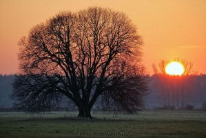 beautiful trees 9 by MT-Photografien