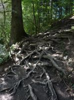 Stock Image - Roots - 03 by Life-For-Sale