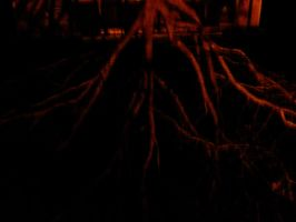 rOOts-54_365 by sketchy713